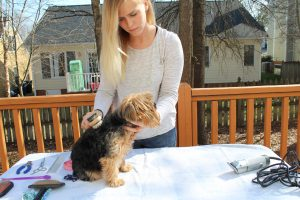 How long do Yorkies live? | All Things Yorkies